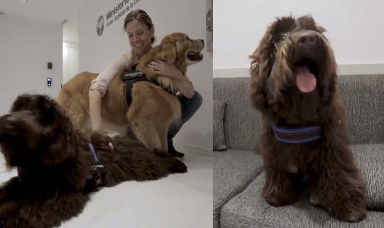 Brownie, el perro que acompañará a niños que declaren en Cámara Gesell por abusos y maltratos