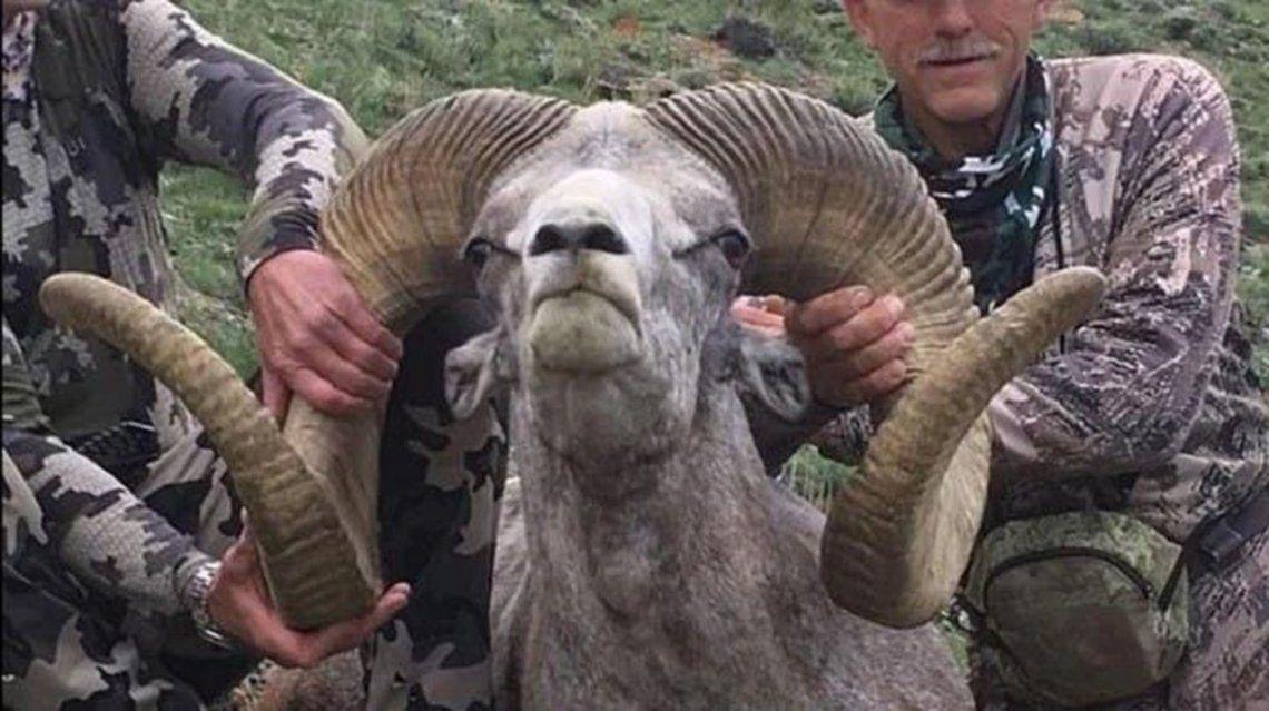 El cazador que mató al famoso león Cecil acabó con un carnero salvaje protegido