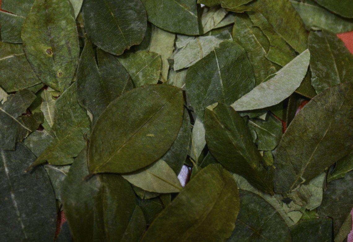 Se pagan hasta 30 mil pesos por un kilo de hojas de coca