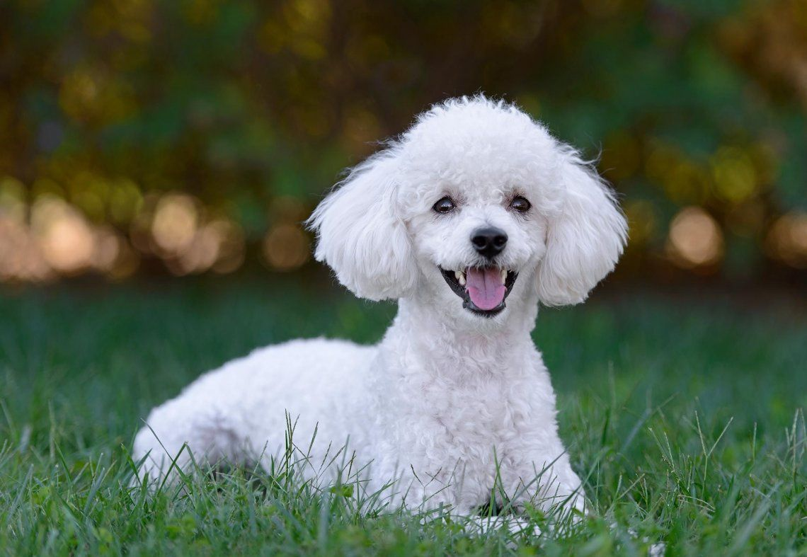Cinco perros que no huelen a perro