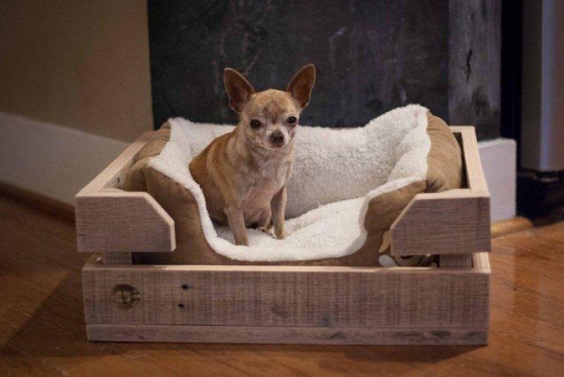 Misterio resuelto: por qué los perros rascan la cama antes de acostarse