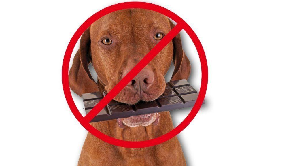 Los 10 alimentos prohibidos para los perros