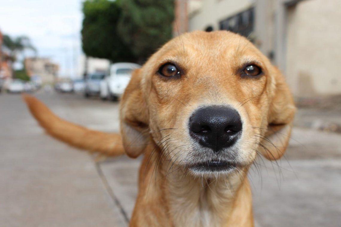 Efemérides: por qué hoy se celebra el Día Mundial del Perro Callejero