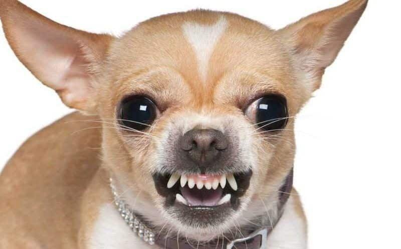 Dime cómo se porta tu perro y te diré quien eres