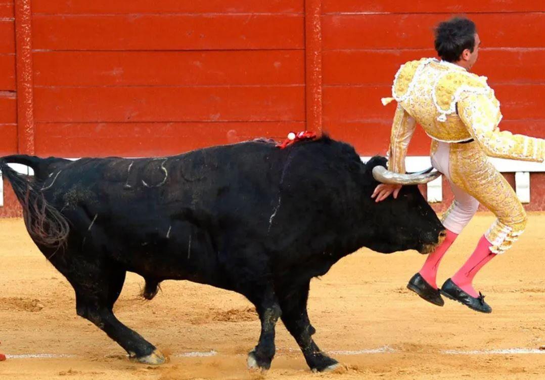Como dicen en España, lo cogió el toro (y se recupera de las heridas)