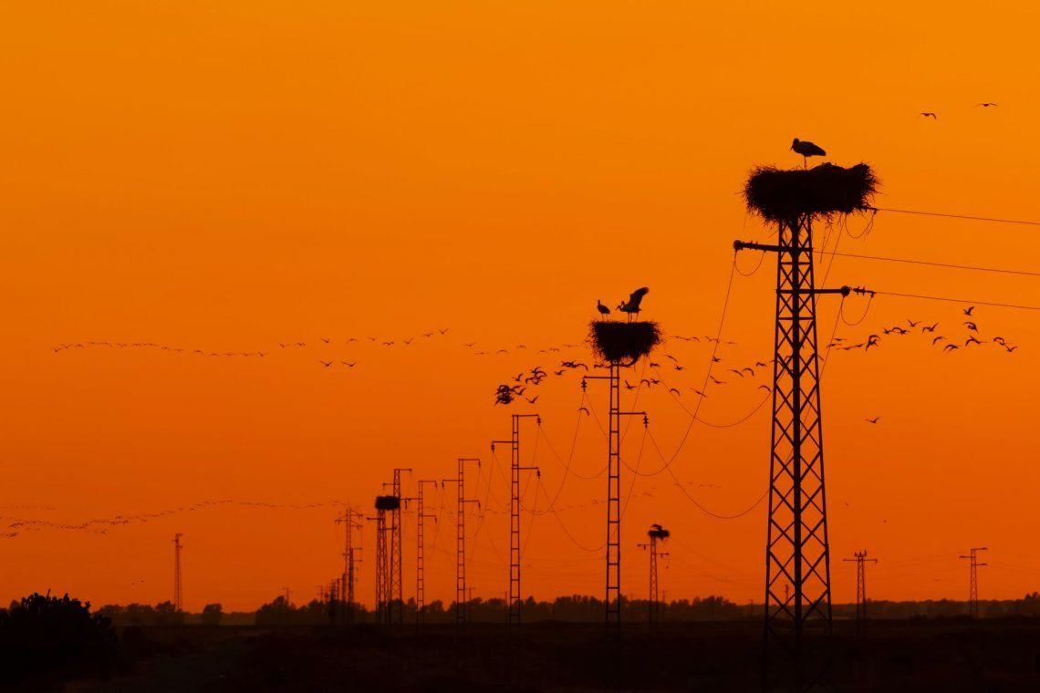 Tercer puesto categoría jardín y pájaros urbanos