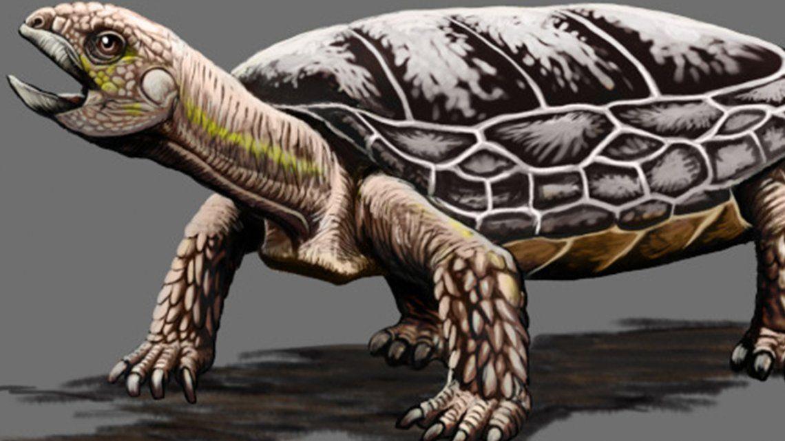 Descubrieron una nueva especie de tortuga: Waluchelys cavitesta