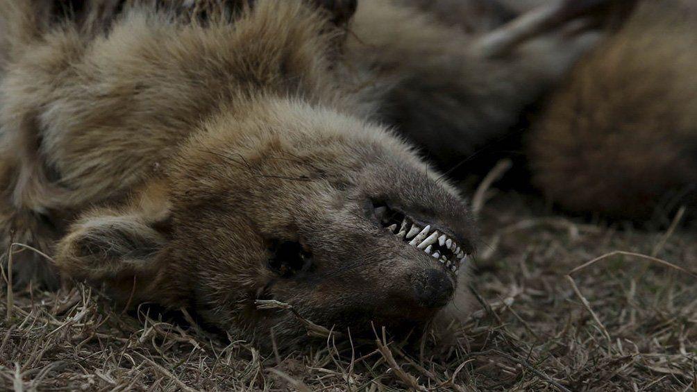 Quema en Delta del Paraná: denuncian la pérdida casi total de la fauna