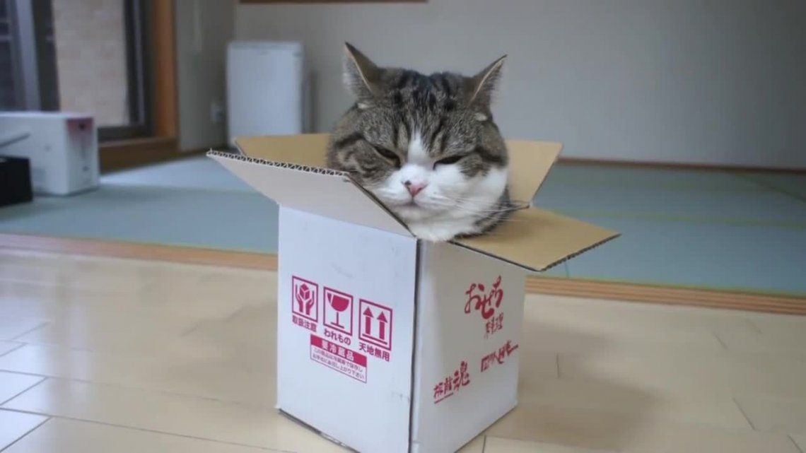Las razones por las que los gatos se esconden en cajas