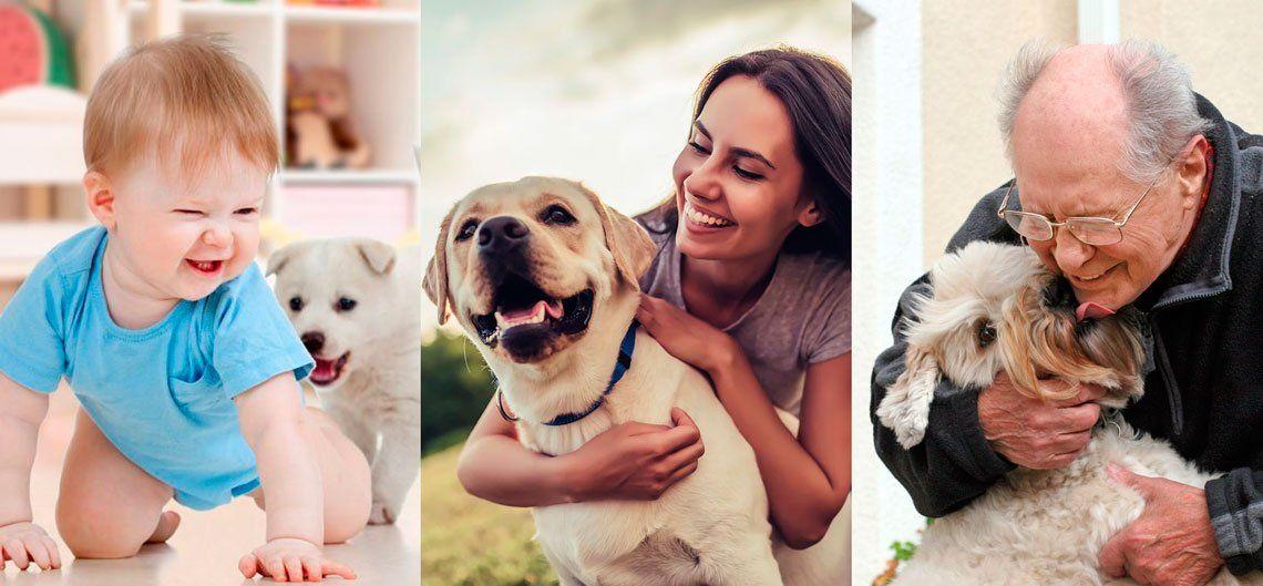 Es un mito que un año en la vida de un perro es igual a 7 en la de un humano