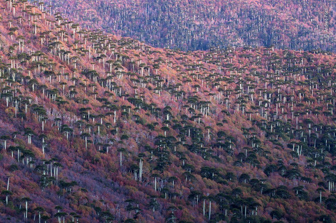 El bosque nacido del fuego por Andrea Pozzi