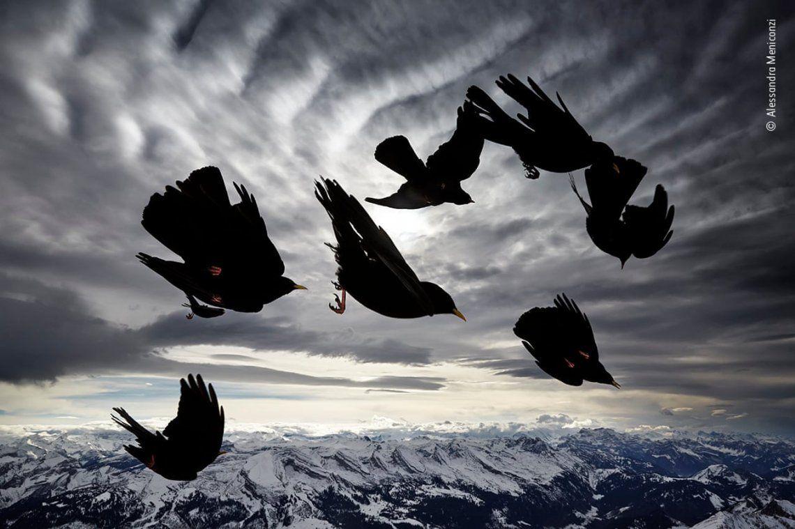 Aves de viento por Alessandra Meniconzi