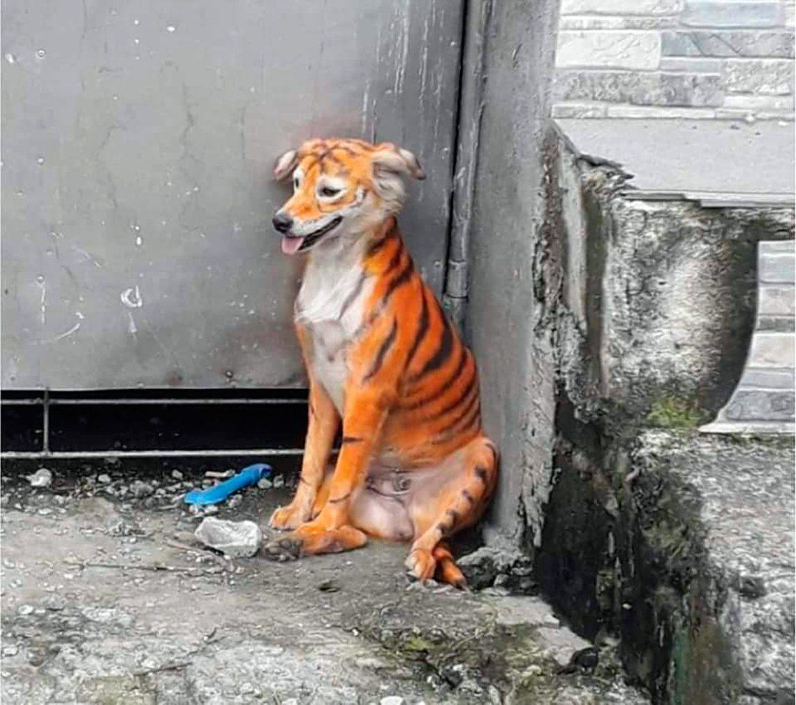 Indignante: pintaron a un perro como Tigger de Winnie Pooh