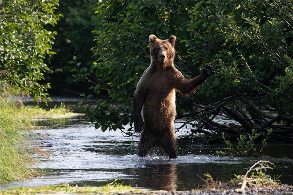 Los divertidos finalistas de los premios Comedy Wildlife Photography Awards 2020