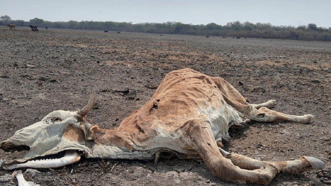 El Gran Chaco sudamericano sufre la peor sequía de los últimos 20 años