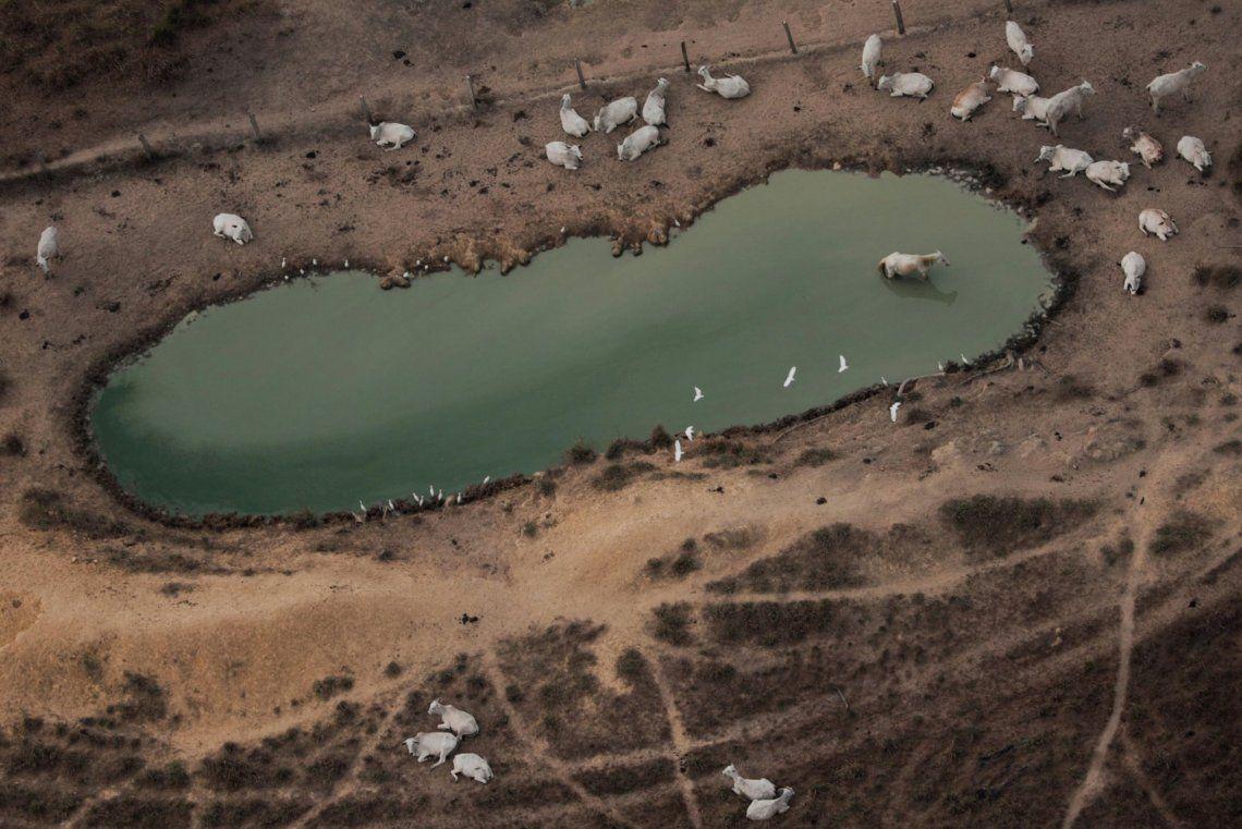 Desgarrador: el fuego en el Pantanal del Mato Grosso avanza sobre la fauna