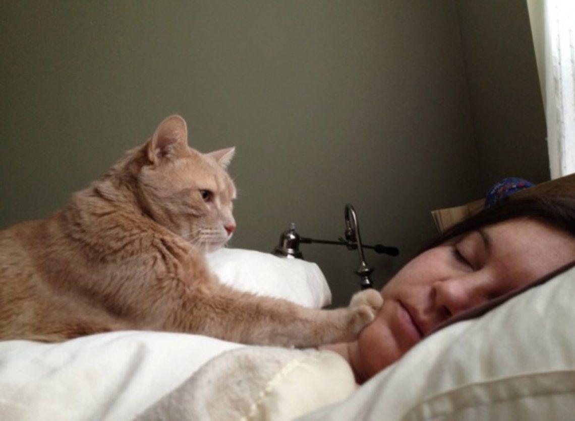 Las cinco razones por las que tu gato te despierta temprano