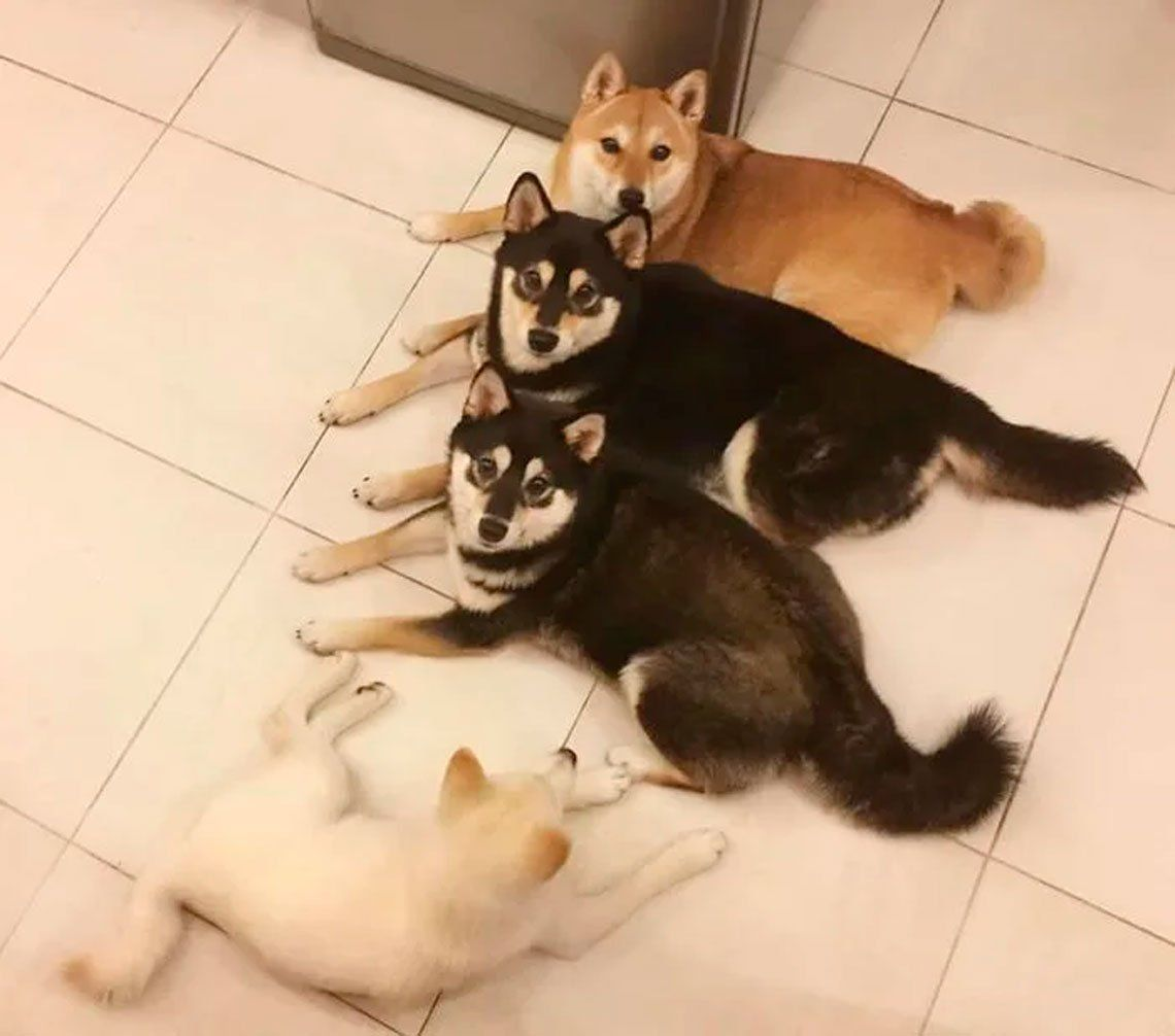 Hina,la perra que es furor por arruinar todas las fotos que saca su dueña