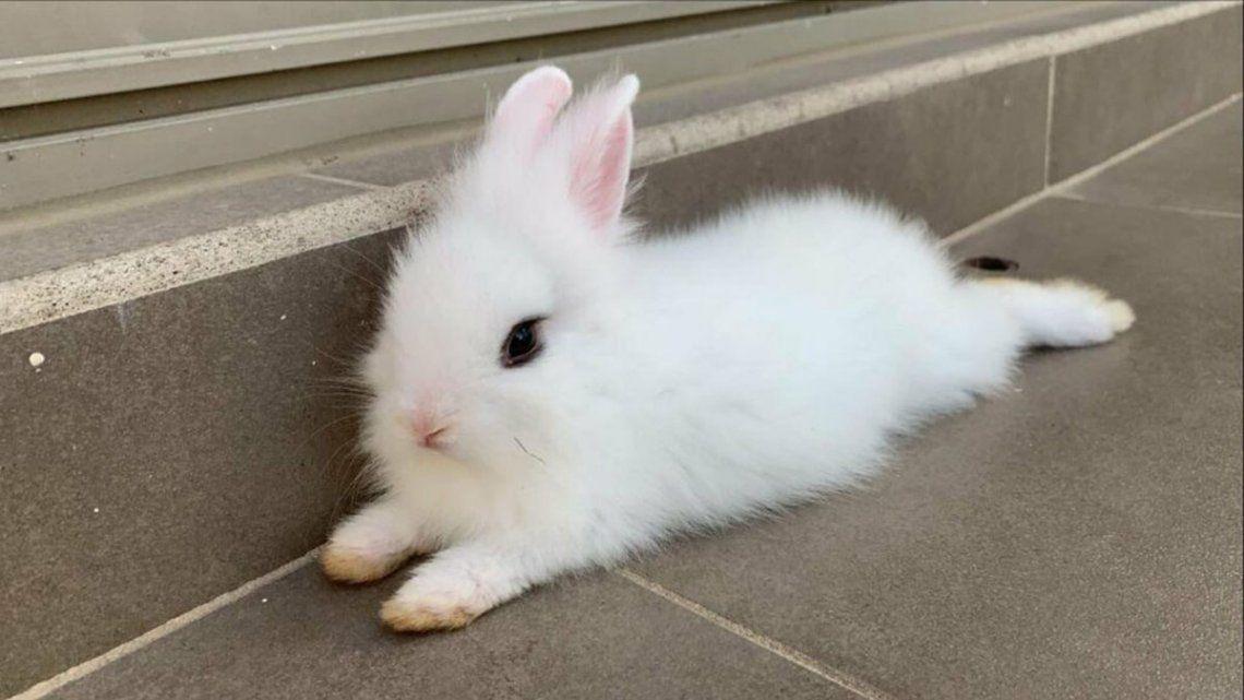 Viral: Copito, el conejo que mató a una tarántula y se volvió un héroe en las redes sociales