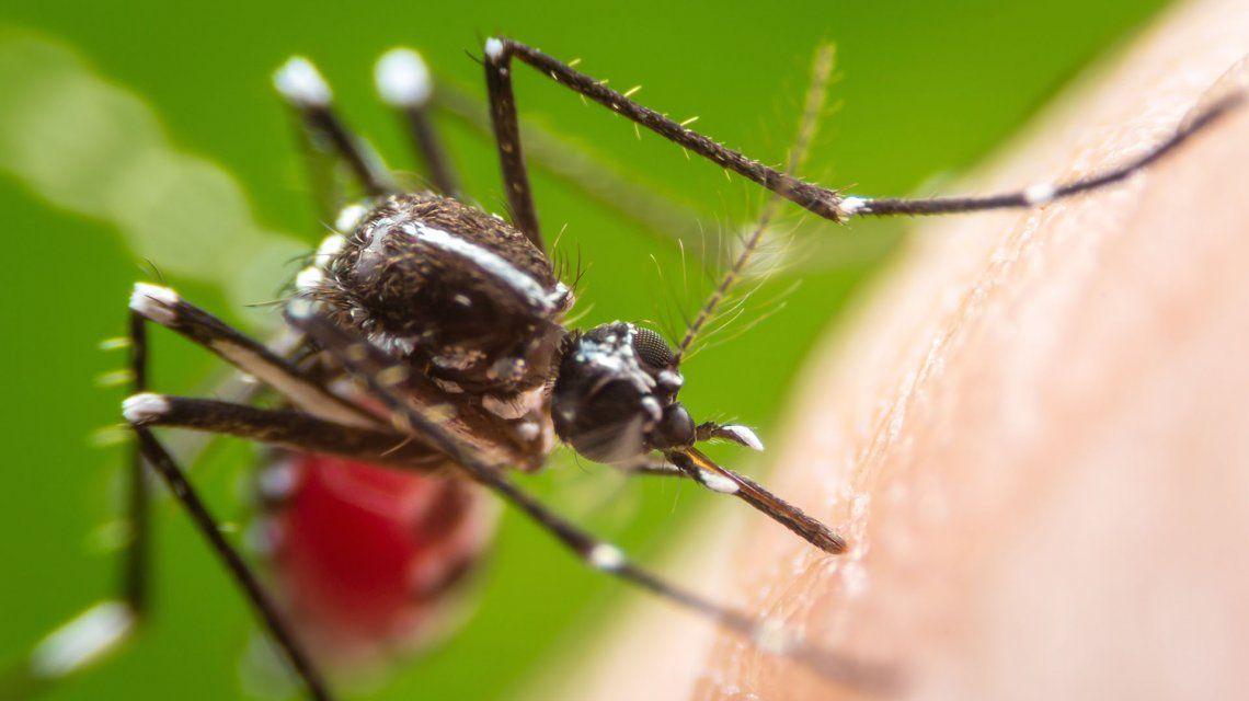 Alarma en EEUU: detectan el primer caso sospechoso de una enfermedad letal transmitida por mosquitos