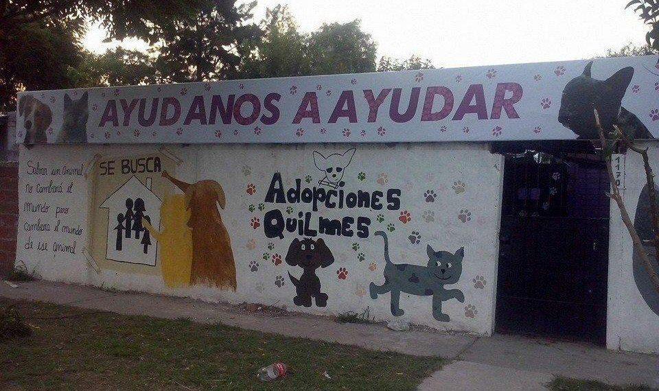En Adopciones Quilmes se duplicó el pedido de mascotas durante la cuarentena.