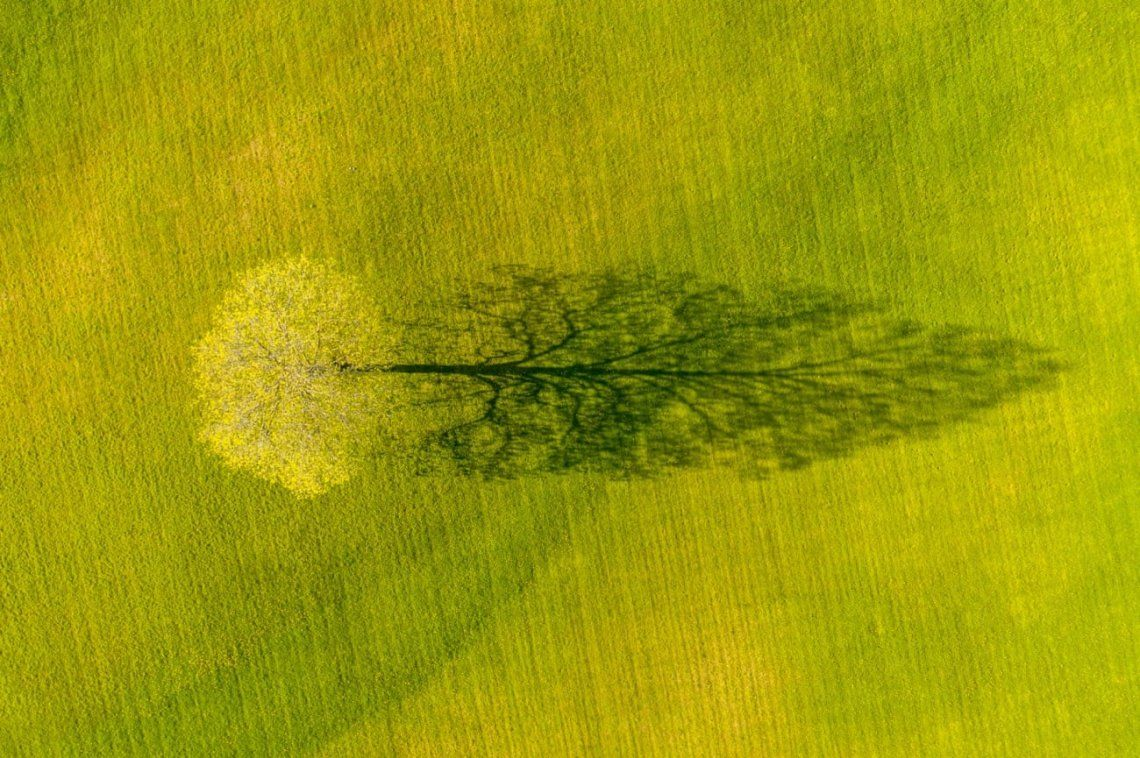 Spring Maple Tree Shadow