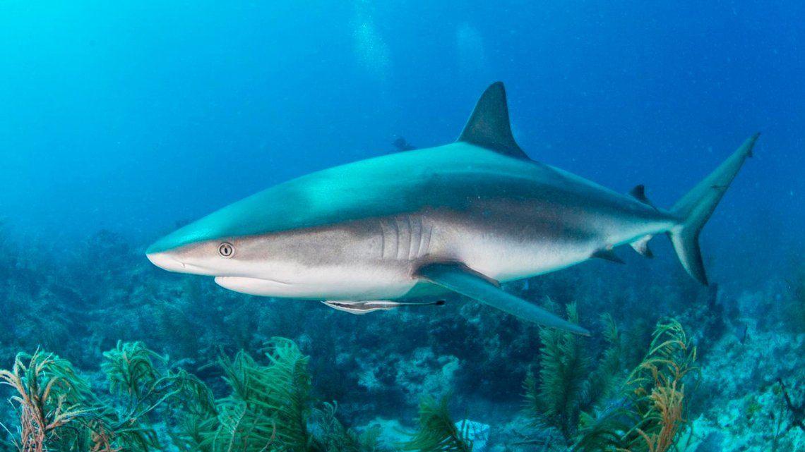 Protectores de animales temen masacre de tiburones para la fabricación de vacunas contra el coronavirus