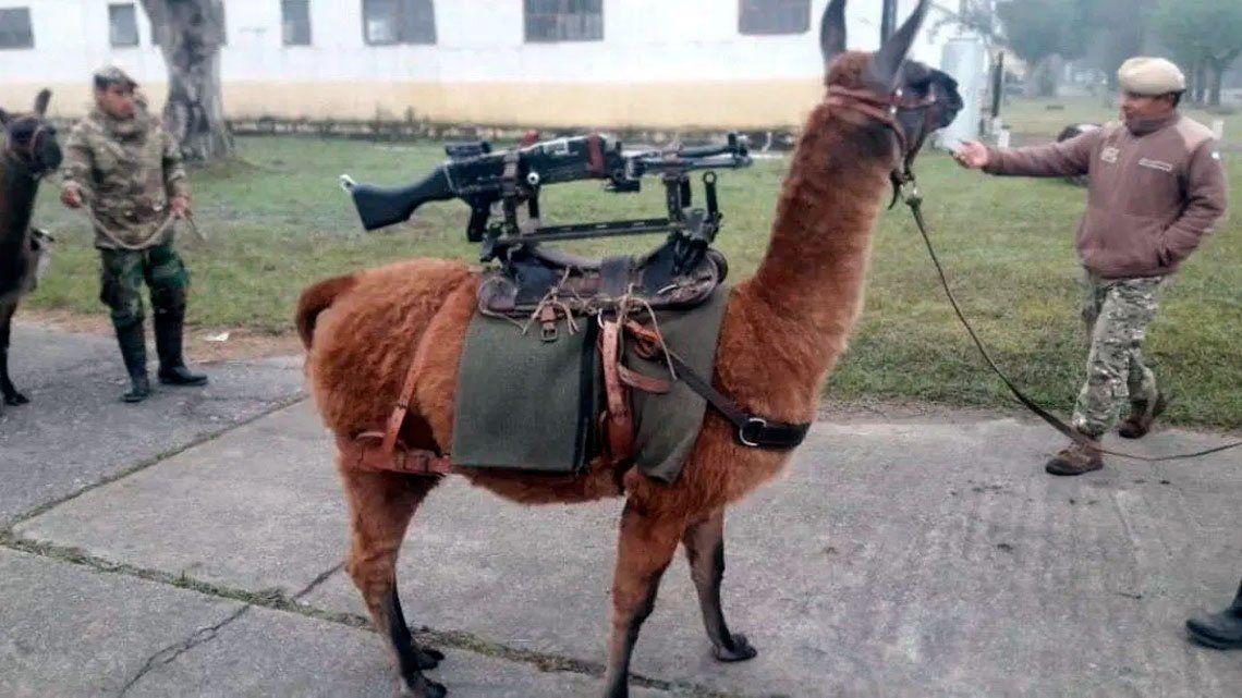 Jujuy entregó al Ejército 20 llamas-metralletas y explotaron las redes sociales