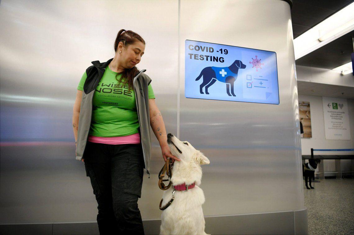 Finlandia: usan perros para detectar el Covid 19 en aeropuertos