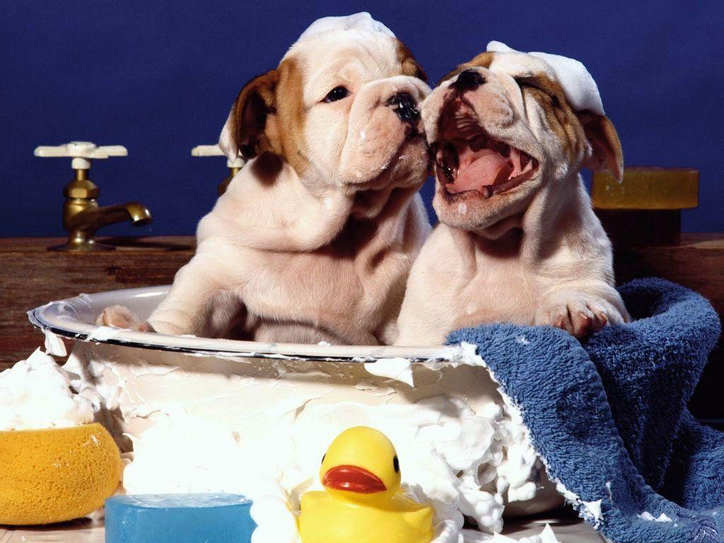 ¿Con qué frecuencia tenemos que bañar a las mascotas?