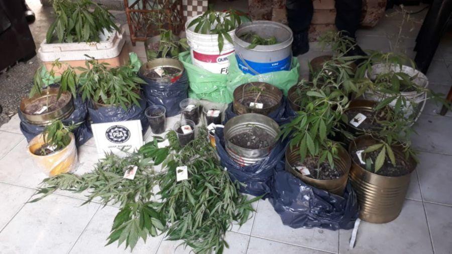 Rosario: plantaban marihuana en el jardín y la enviaban por el correo