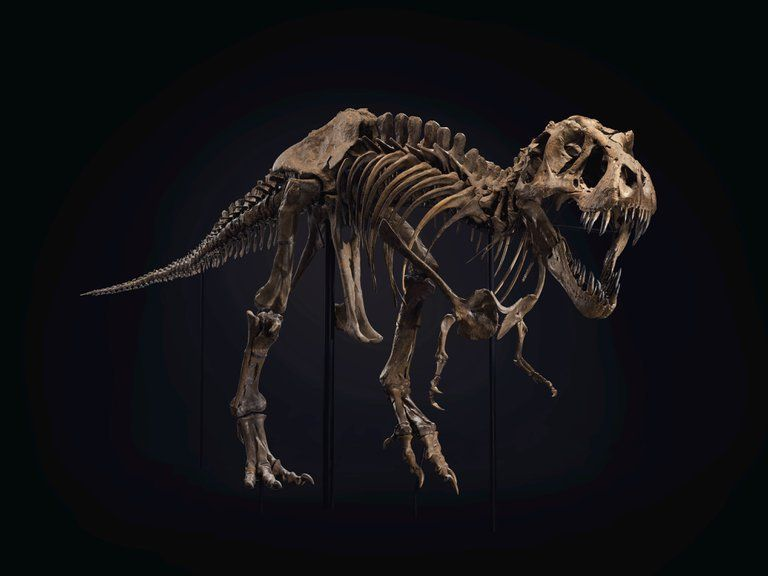 T-Rex Stan - Foto cedida por Christies