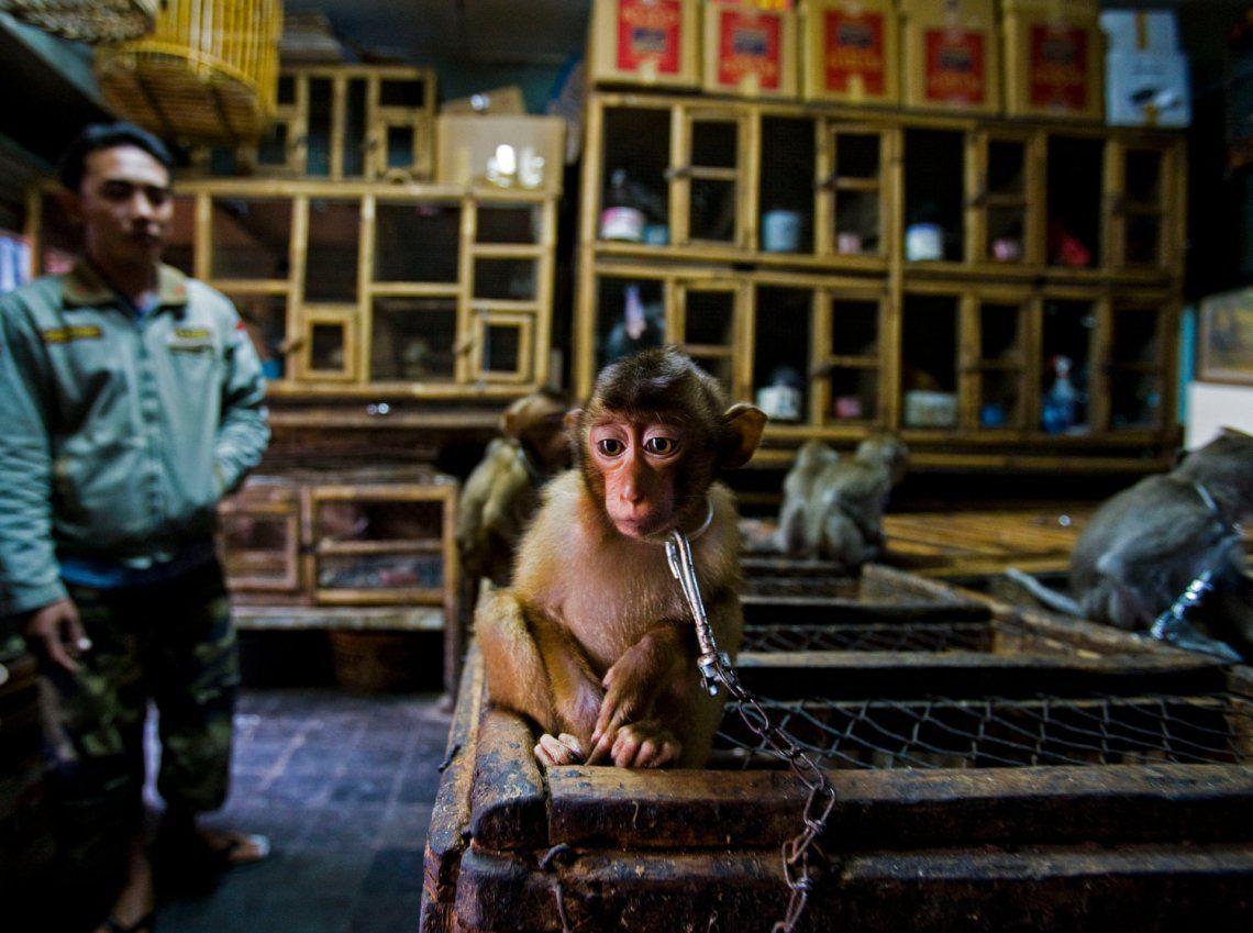 Ganador - Premio a la historia del fotoperiodista de vida silvestre: Backroom business por Paul Hilton