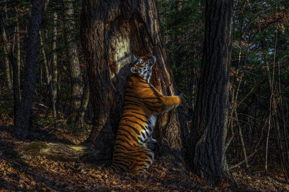 Ganador: Animales en su entorno y Ganador del título de Garand: El abrazo de Sergey Gorshkov