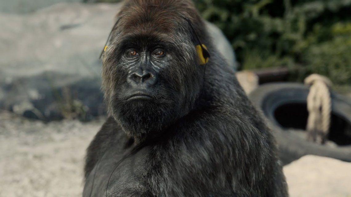 El gorila hiperrealista de PETA.