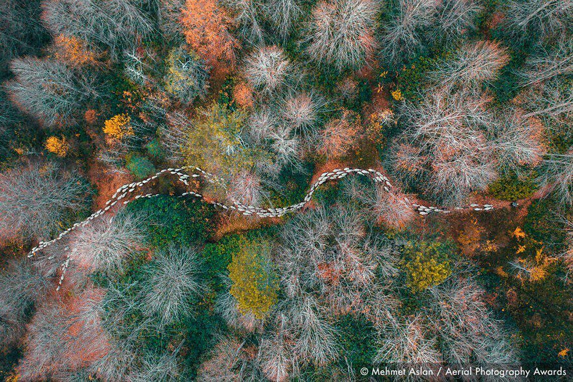 Primer lugar en la categoría Árboles y bosques: Camino forestal
