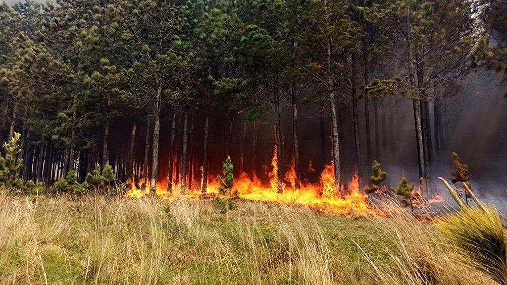 Persisten los incendios forestales en Salta, Jujuy y Corrientes