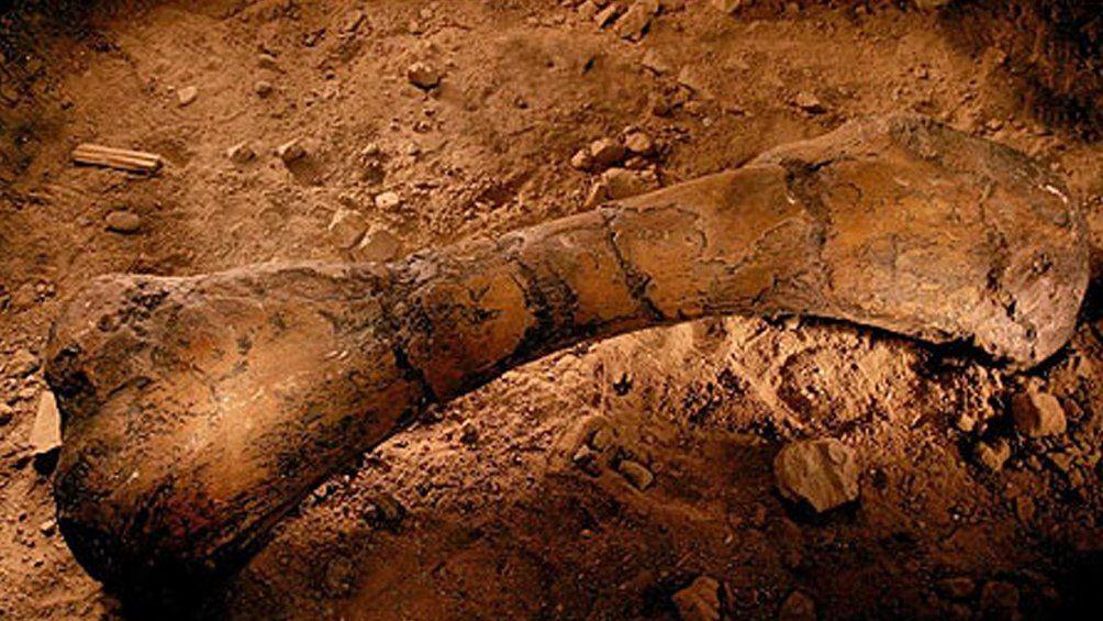 La Rioja: descubren fósiles de dinosaurios de más de 70 millones de años