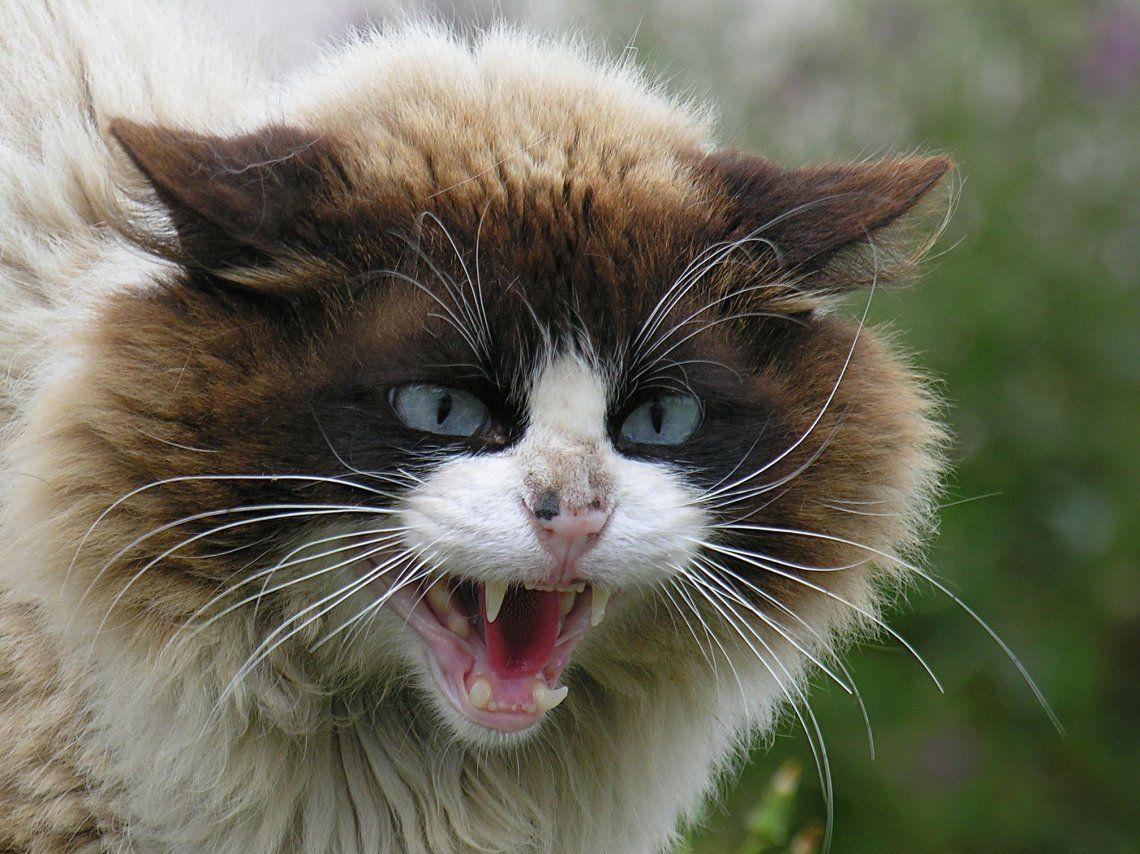 La Súper gata que no le tiene miedo a los perros y le baja el pantalón a su dueño en defensa de su cría