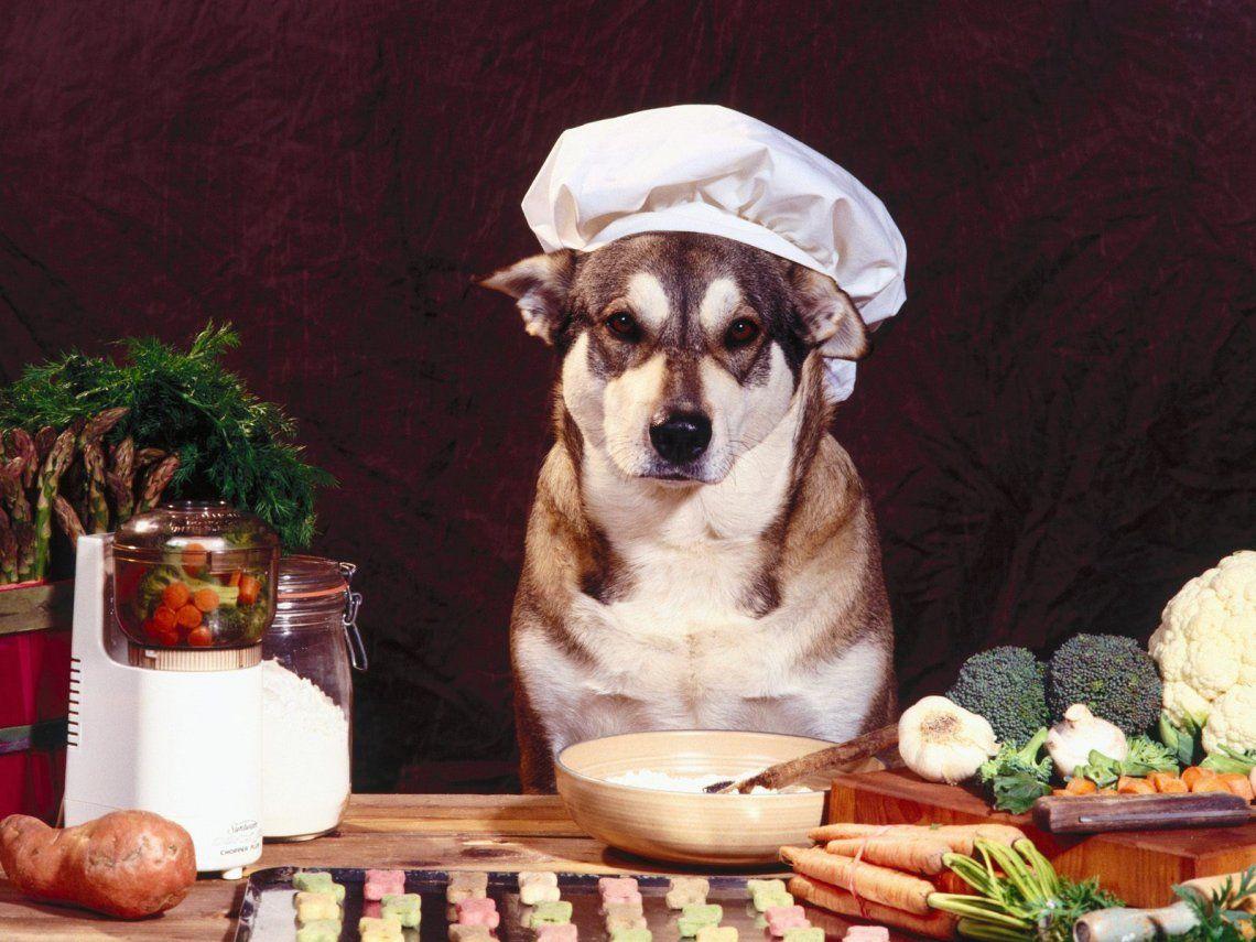 Los beneficios de la comida casera para las queridas mascotas