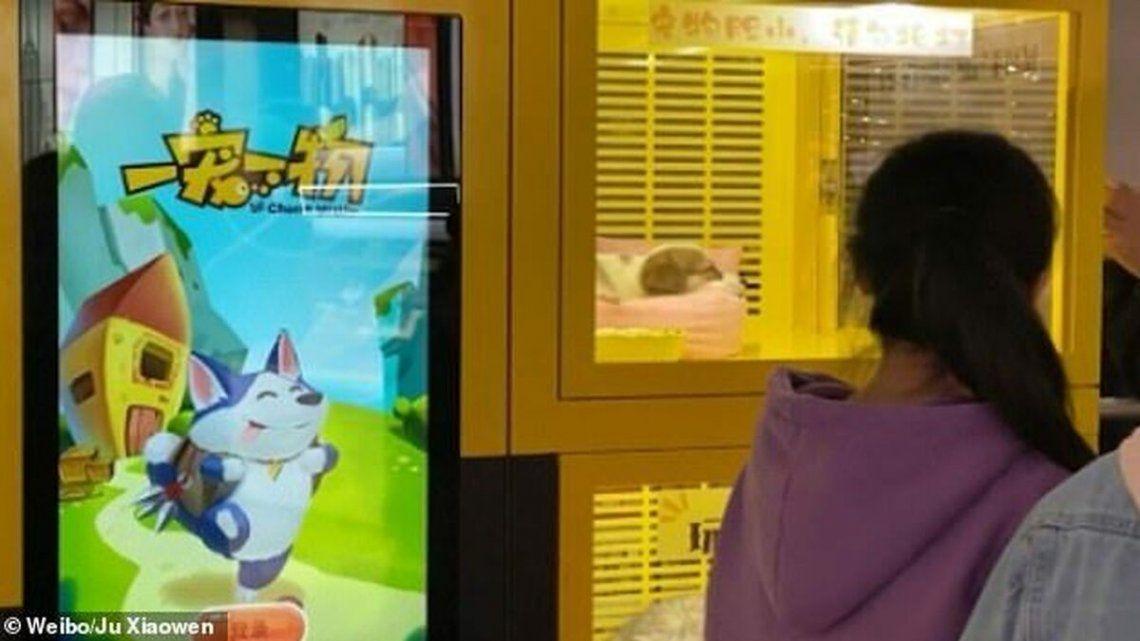China: máquina expendedora con perritos y gatitos como premio causa indignación