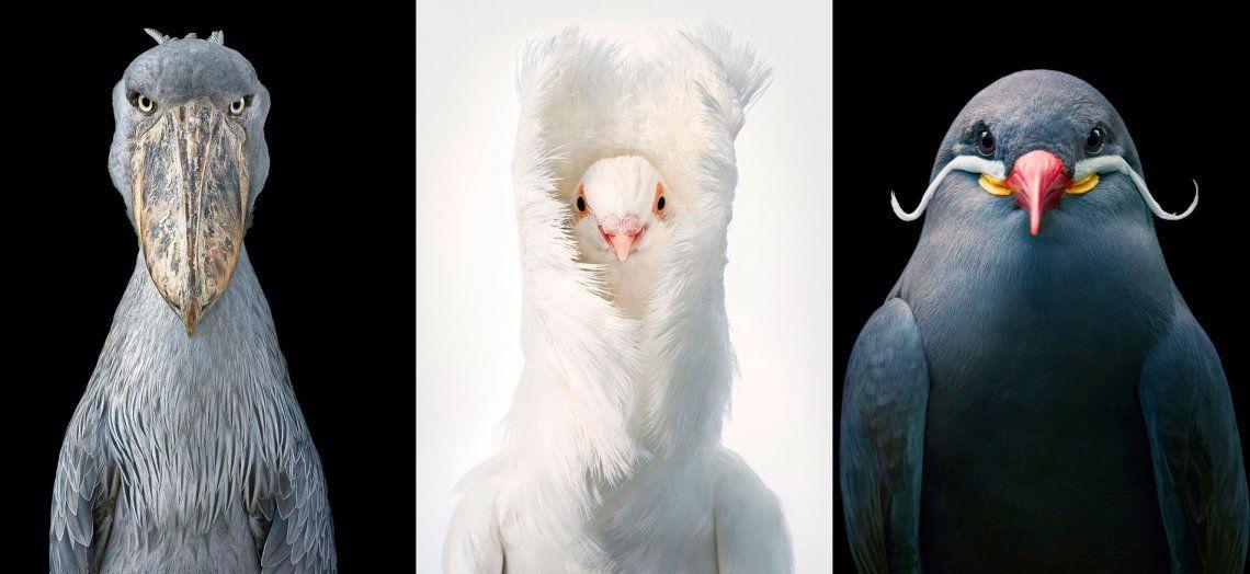 Impresionantes retratos de aves raras y en peligro de extinción