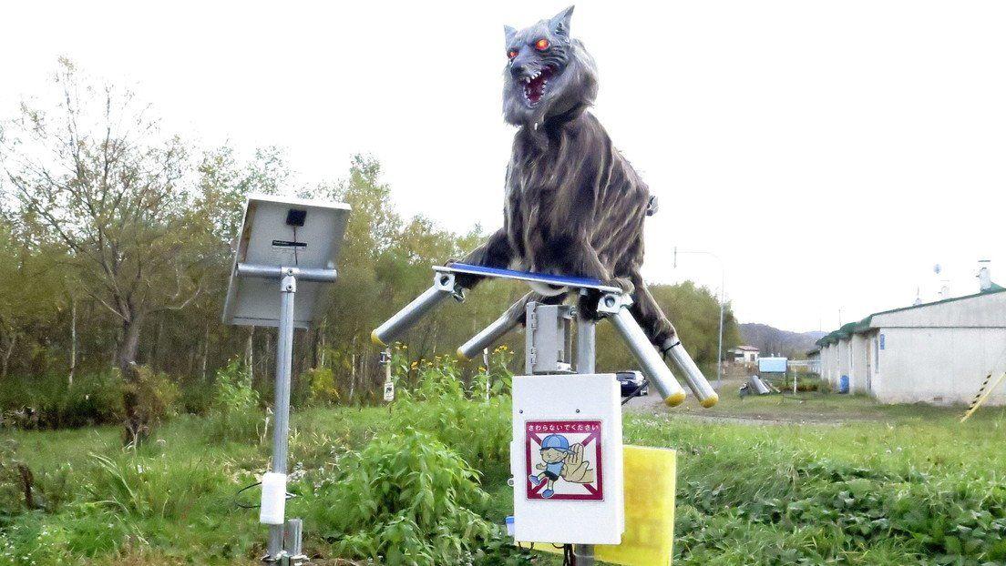 En Japón crearon este lobo robótico.