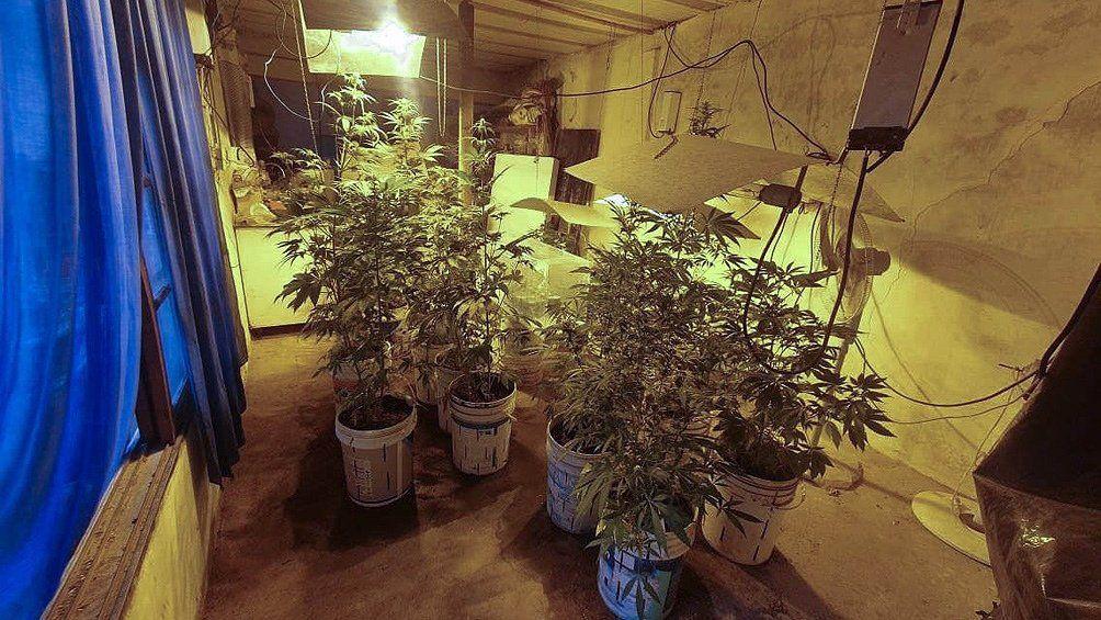 Los Polvorines: Marihuana en un sótano.