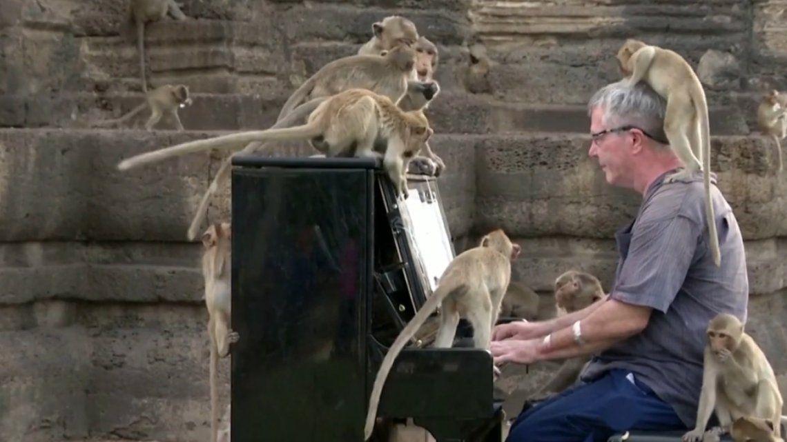 Tailandia: pianista británico da un concierto para cientos de monos