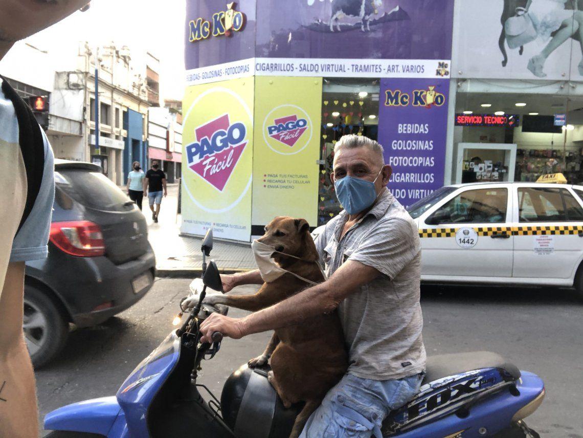 Furor en Twitter: El perro en moto y con barbijo