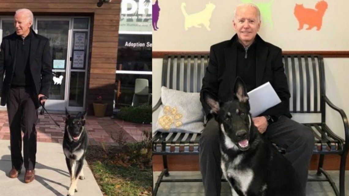 En la Casa Blanca Joe Biden tendrá dos pastores alemanes