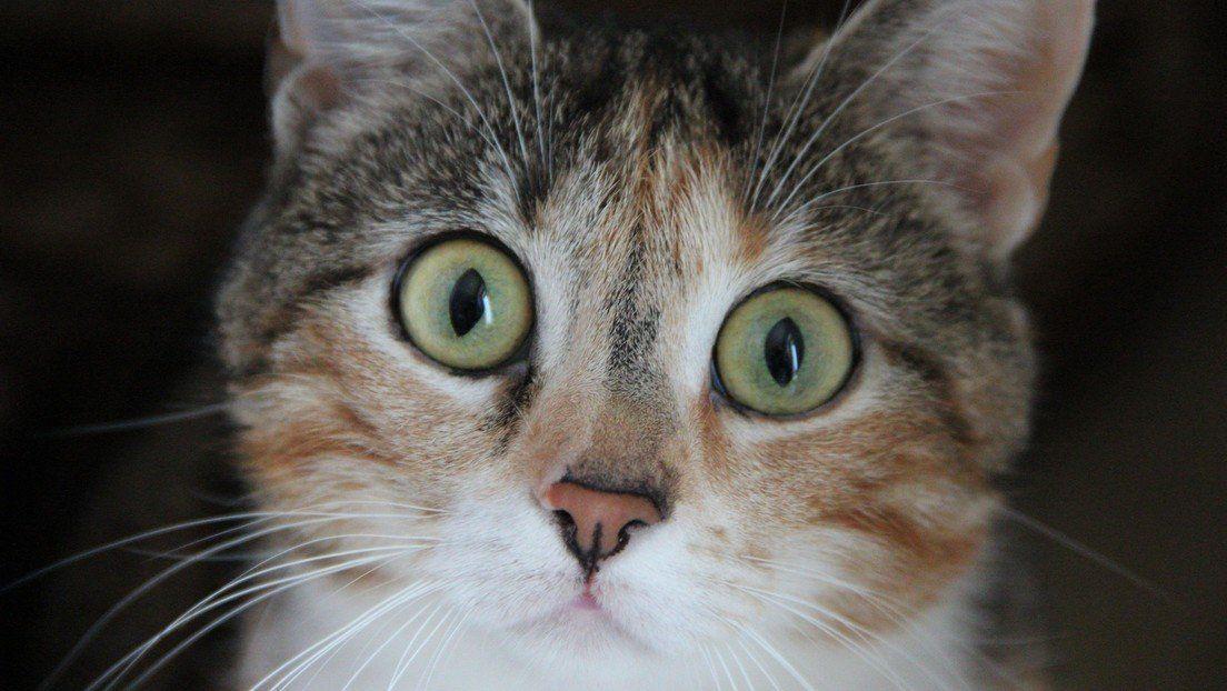 Video de un gato es furor en Tik Tok
