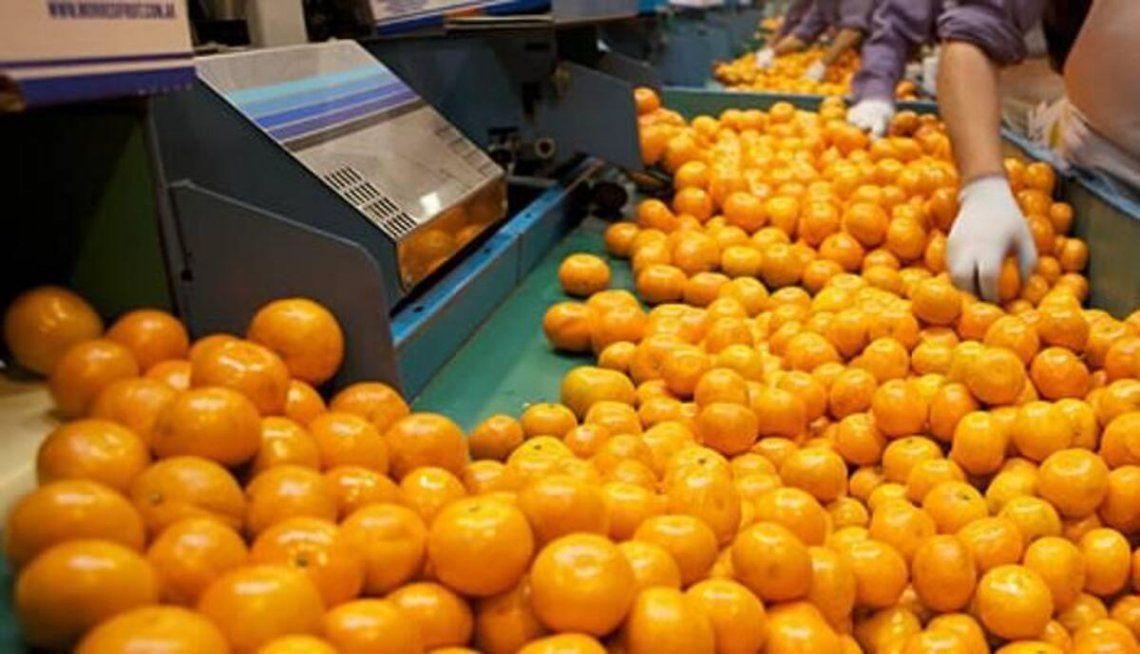 En el precio de las naranjas