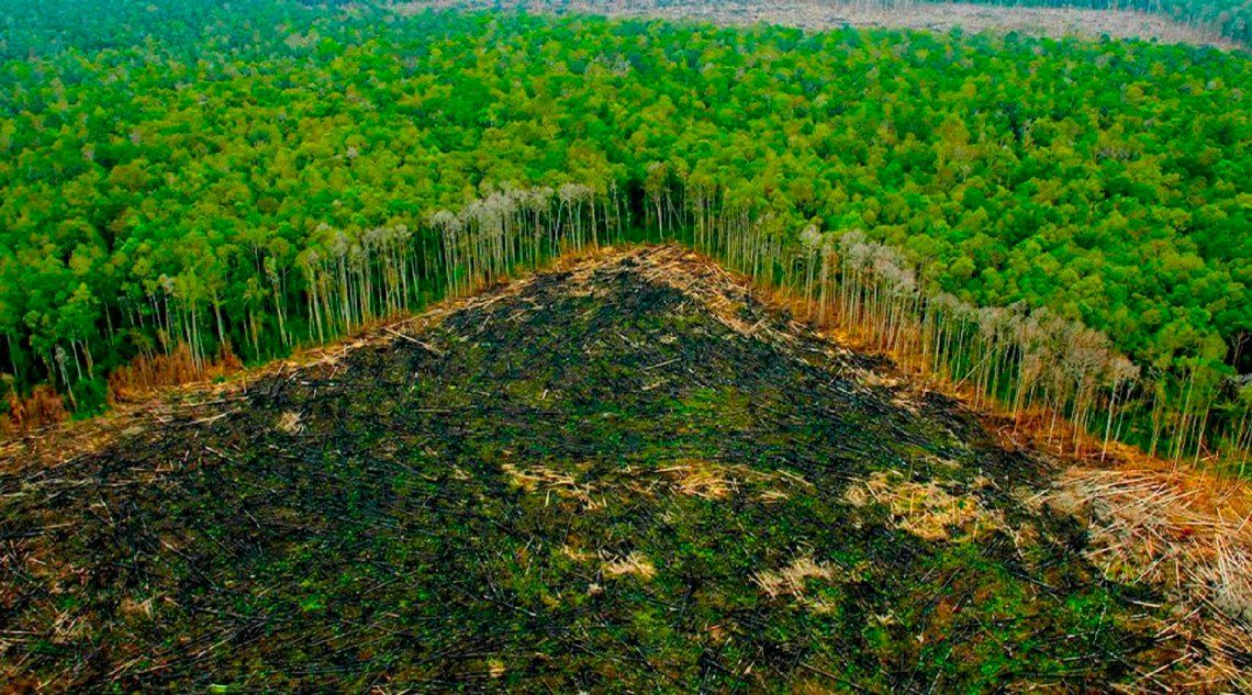 Brasil: La Amazonia pierde miles de kilómetros cuadrados de selva